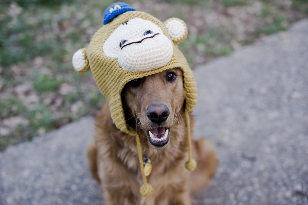 Mailchimp hat on a customer's dog!